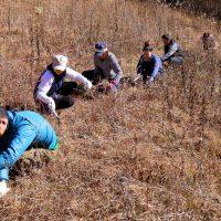 櫛形山草刈り